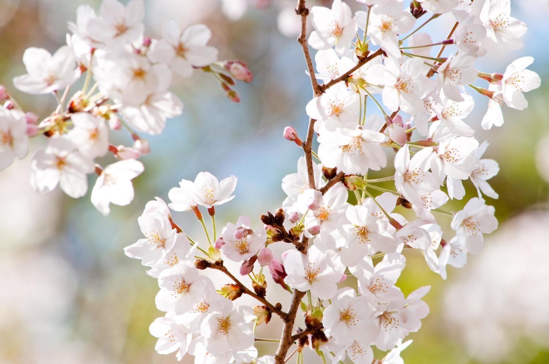 4/17(日)「弁護士と税理士による相続無料相談会」のお知らせ
